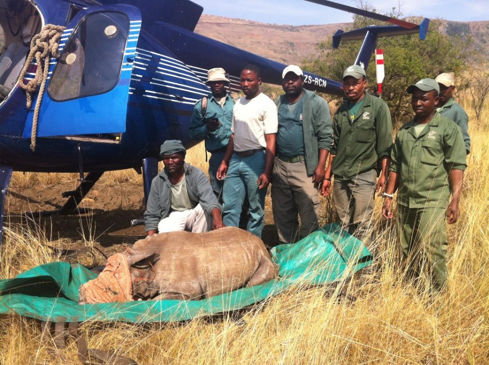 Baby rhino helicopter