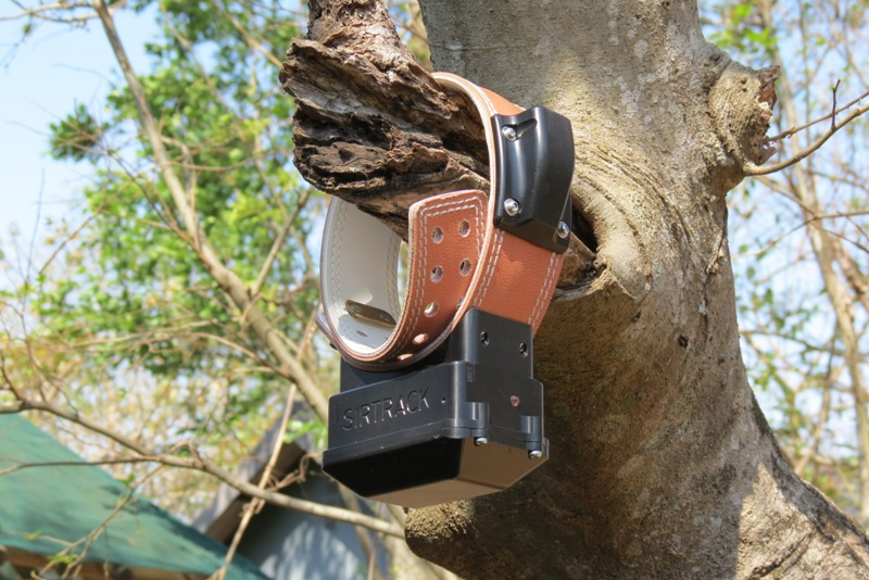 Wild dog satellite collar