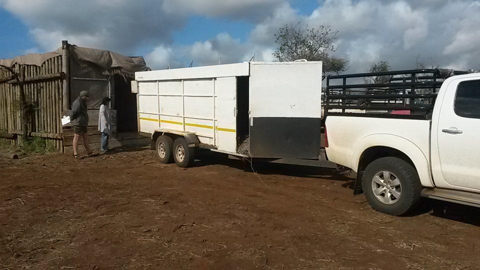 Zululand Rhino Reserve Nyala