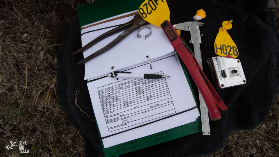 vulture tagging tools