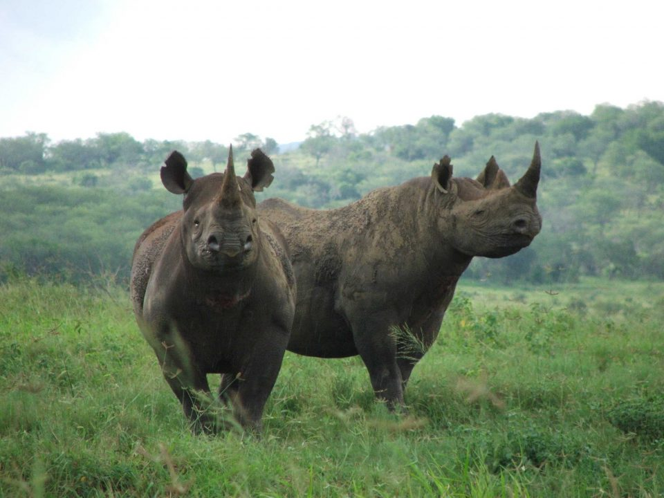 Black Rhino Monitoring and Tracking