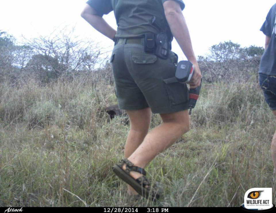 Setting up the camera trap