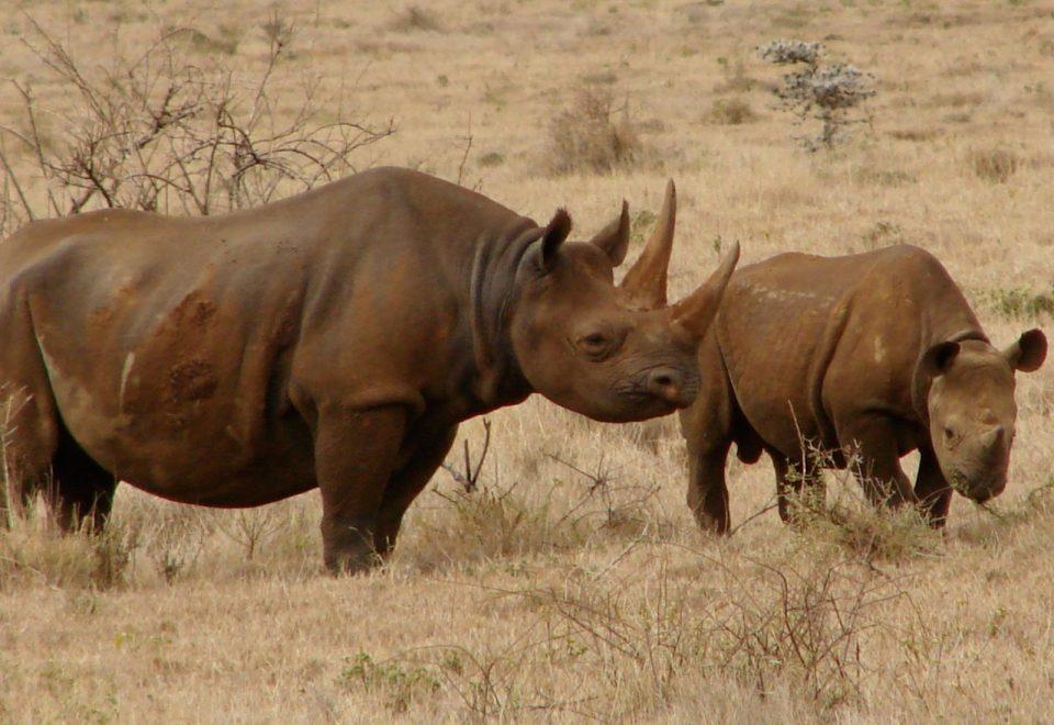 Black Rhino Damaraland
