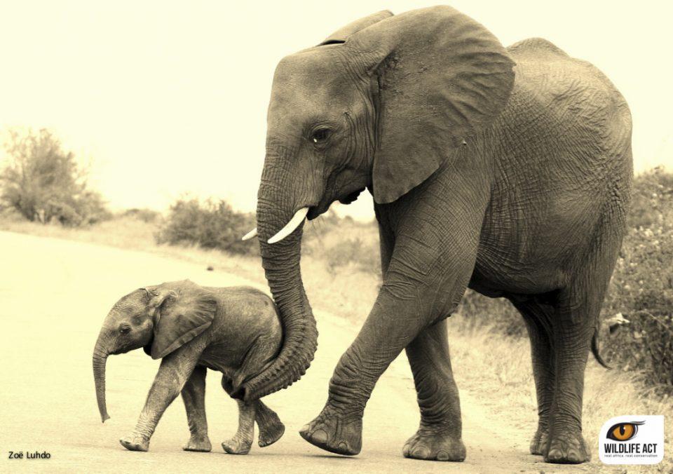Elephant and Calf ZRR. Elephant Summit 2015 Report