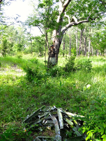 Setting up the camera trap in Liwonde National Park - Black Rhino Monitoring Volunteer Experience