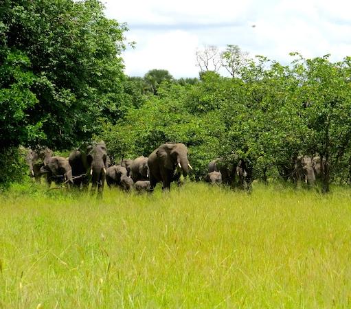 Elephant sighting close to camp - Liwonde National Park, Liwonde - Black Rhino Monitoring Volunteer Experience