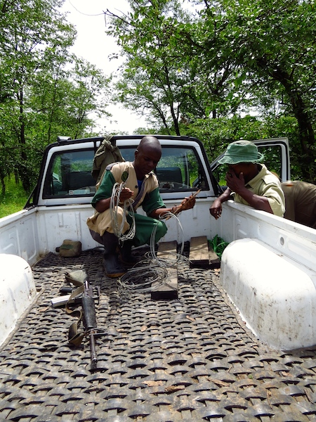 Counting snares - Black Rhino Monitoring Volunteer Experience