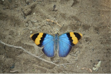 Peculiar insects in Tembe Elephant Park butterfly