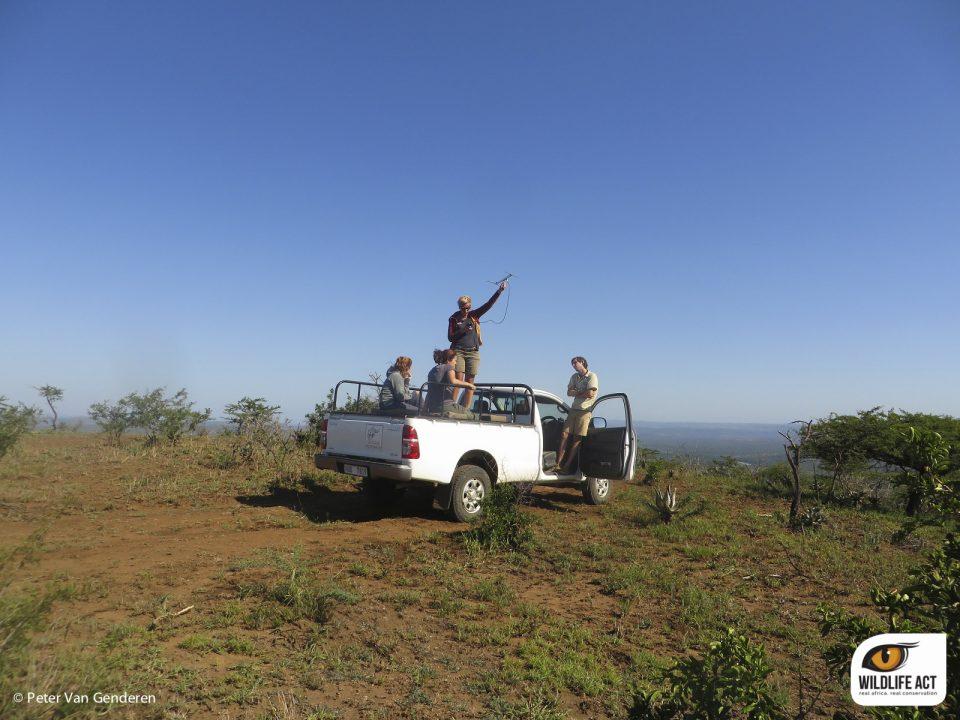 Wild Dog monitoring in Zululand