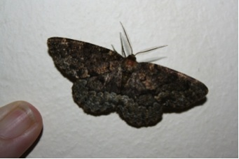 Peculiar insects in Tembe Elephant Park