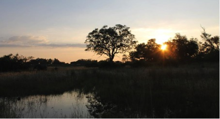 Sunset Okavango Delta.