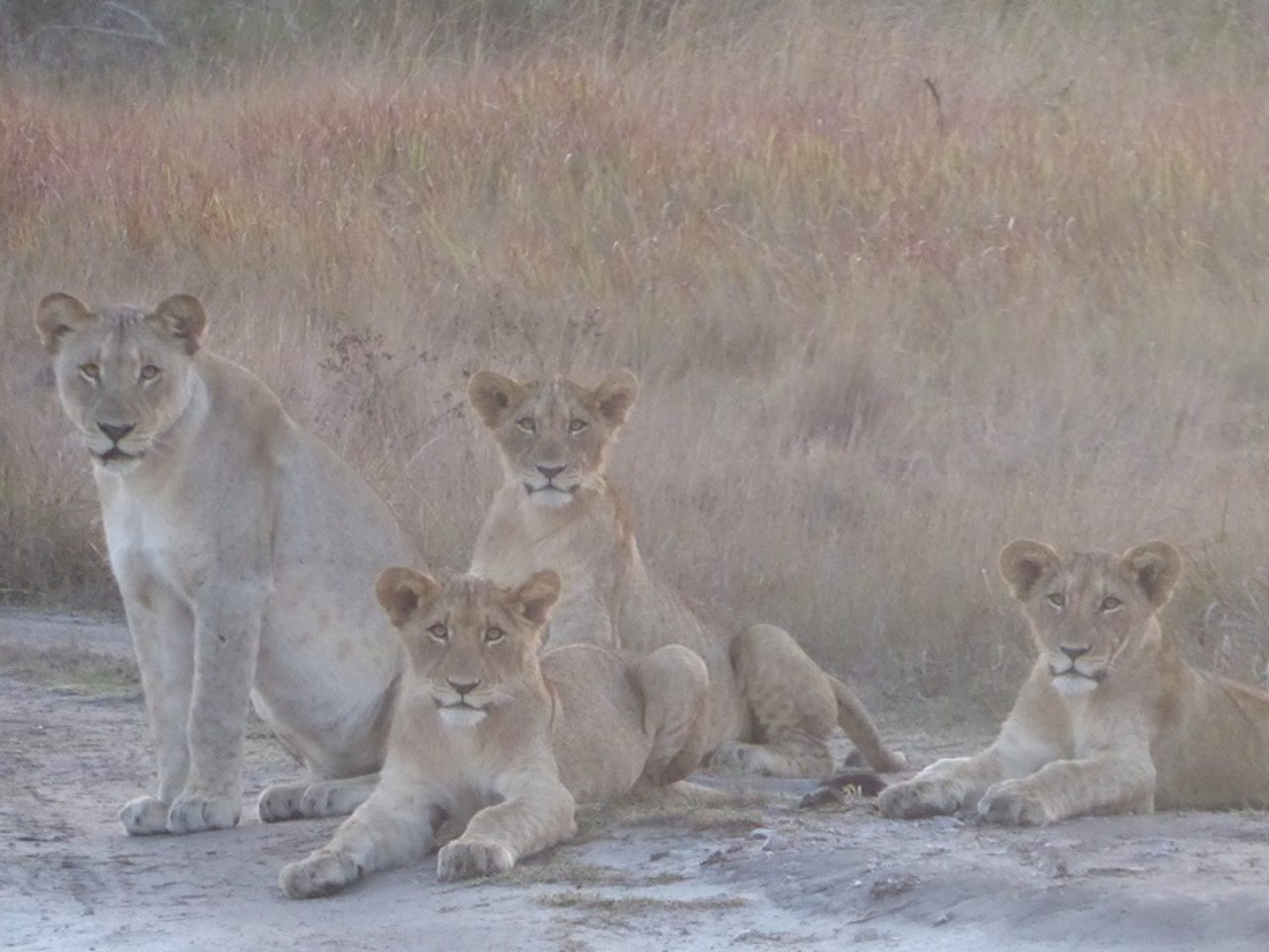 Tembe Southern Pride