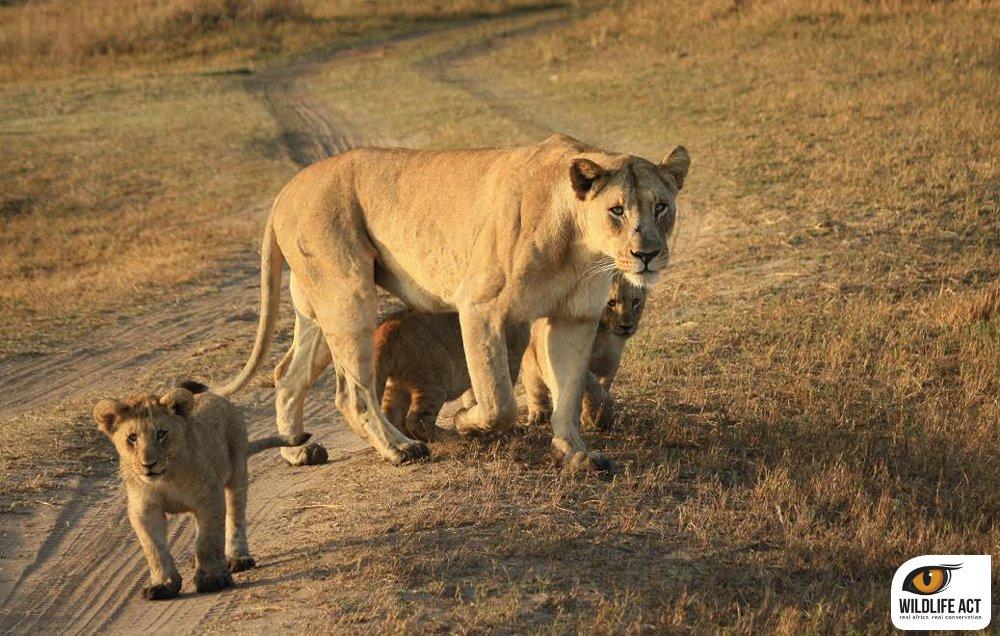 Volunteering wirth Lions