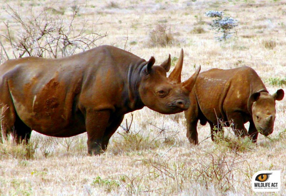 Court Lifts Ban on Rhino Horn Trade