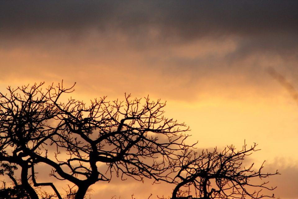 ZRR Sunrise - Manyoni Private Game Reserve