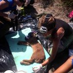 Caracal Rescue