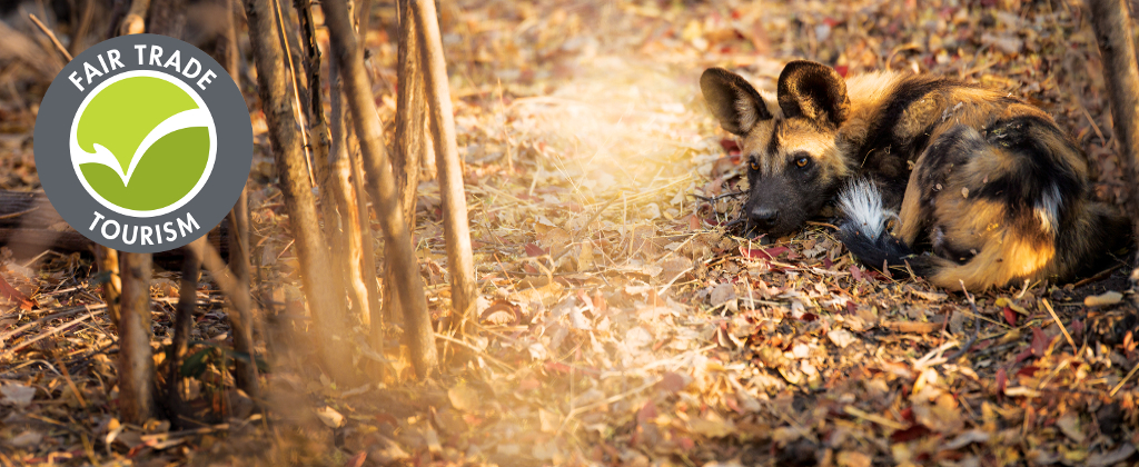 Wildlife ACT Endangered Species Project