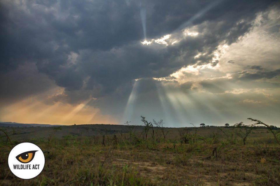 Somkhanda Game Reserve 2