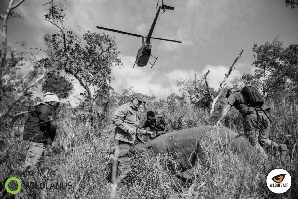 Kelvin Trautman - Stop Rhino Poaching