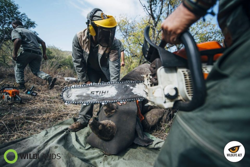 Kelvin Trautman - Rhino Dehorning to Stop Rhino Poaching