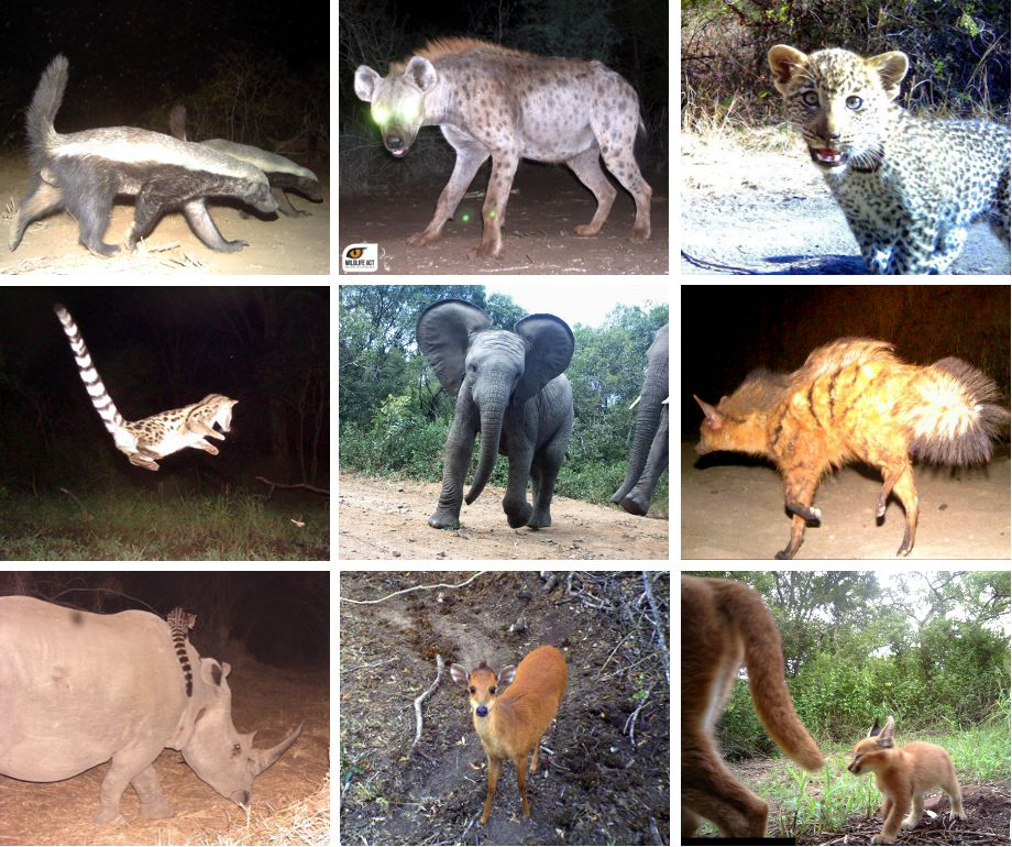 Best of the camera trap photos