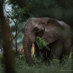 Elephant Photo by Chantelle Melzer