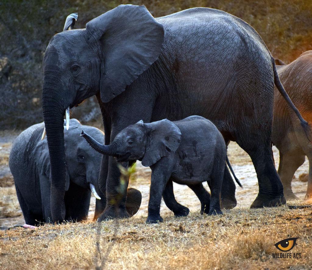 Photo by Wildlife ACT Monitor Hayden Rattray