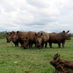 Rhino Crash - Photo by Fi Evans