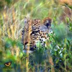 Tembe Leopard. Photo by Hayden Rattray