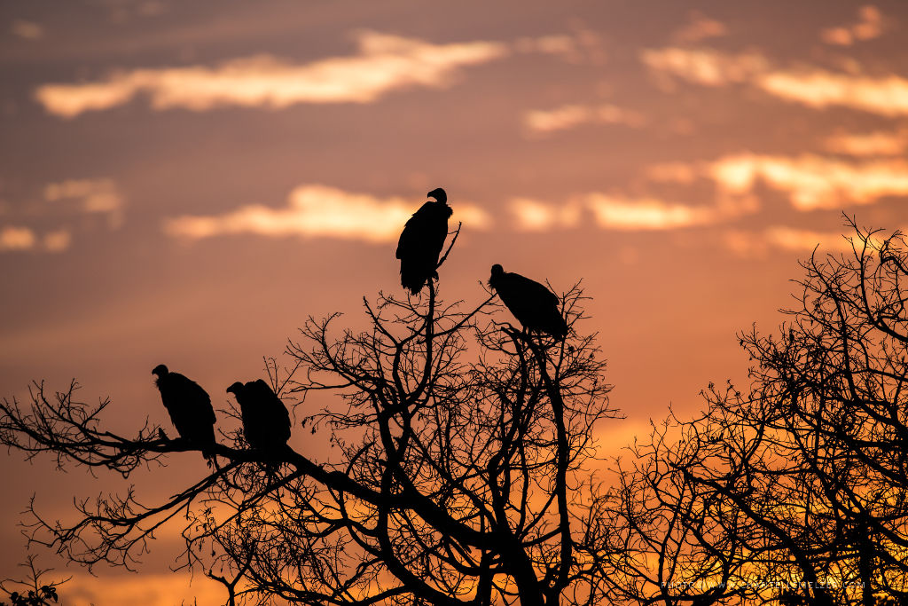 Vultures Photo by Chantelle Melzer