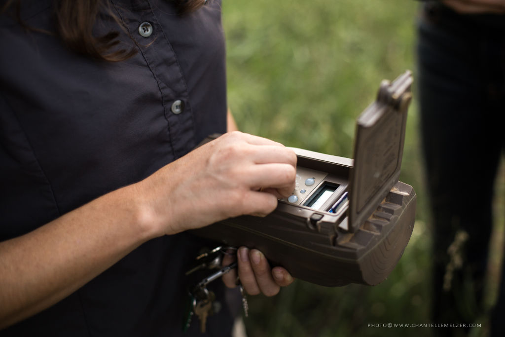Camera Trap Inspection. Photo by Chantelle Melzer