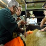 Tembe Phinda Lion Relocation