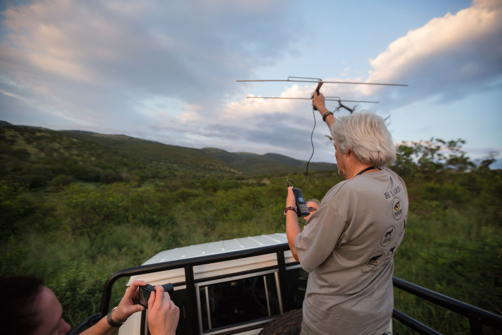 Telemetry - Wildlife Conservation Volunteering Abroad for Over 50s