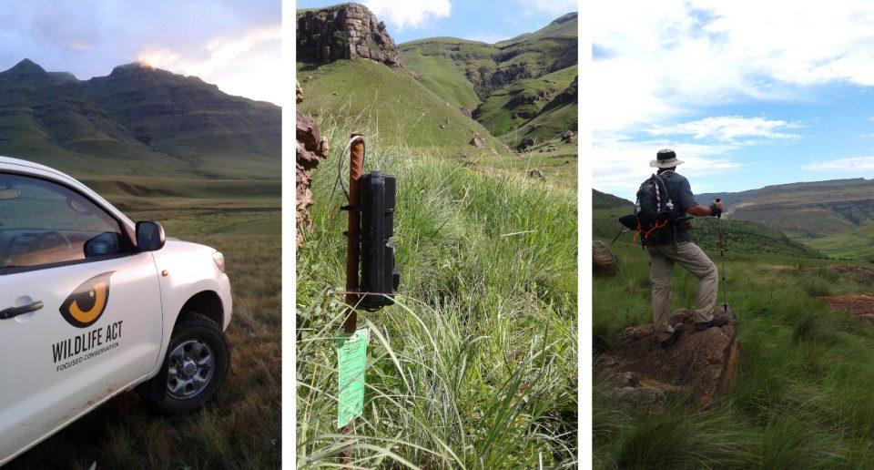 Drakensberg Leopard Survey 2017