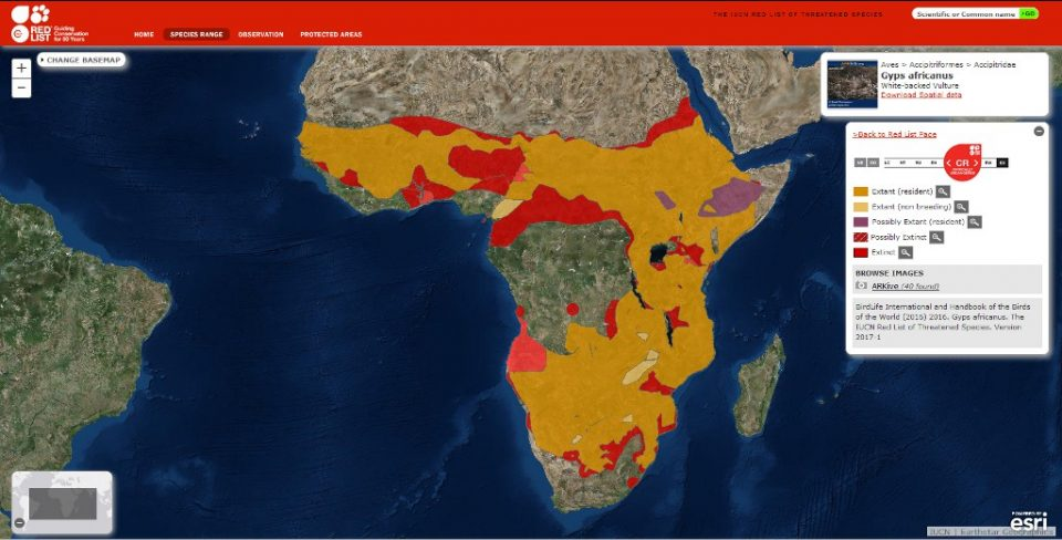 White-backed vulture distribution map