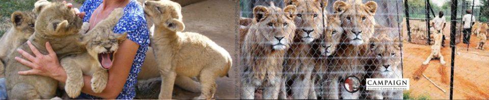 Say no to Cub Petting