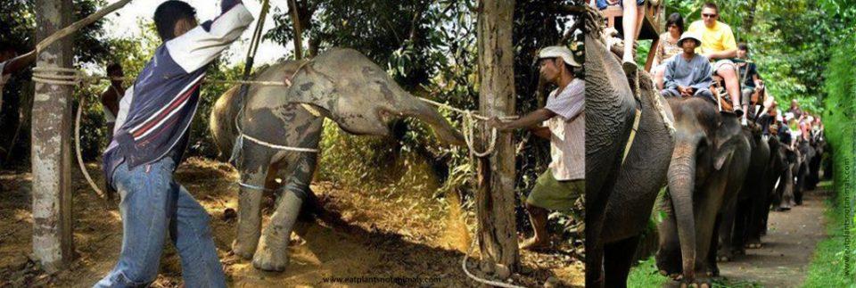 Say no to Elephant Rides