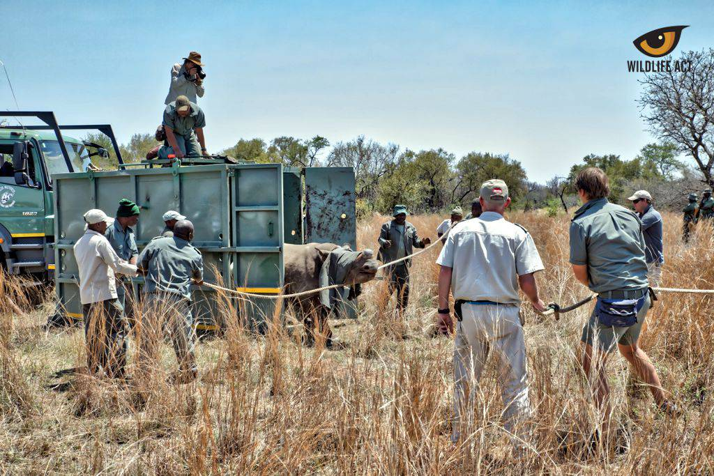 Black Rhino Range Expansion Project Update October 2017