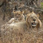 Kalahari Males and the Tembe Females (1Nov2017)