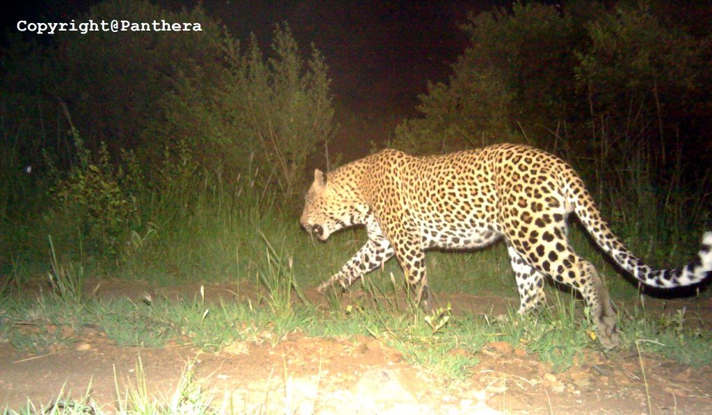 Leopard Identification