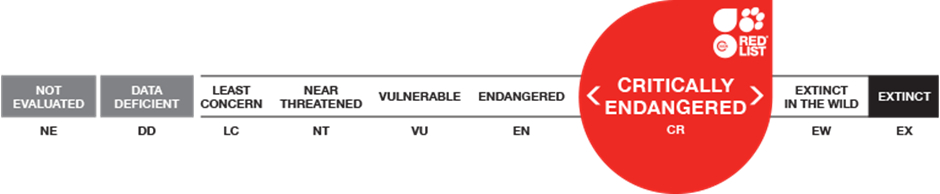 IUCN Status of Hooded Vultures