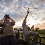 Senior Wildlife Volunteering in Africa