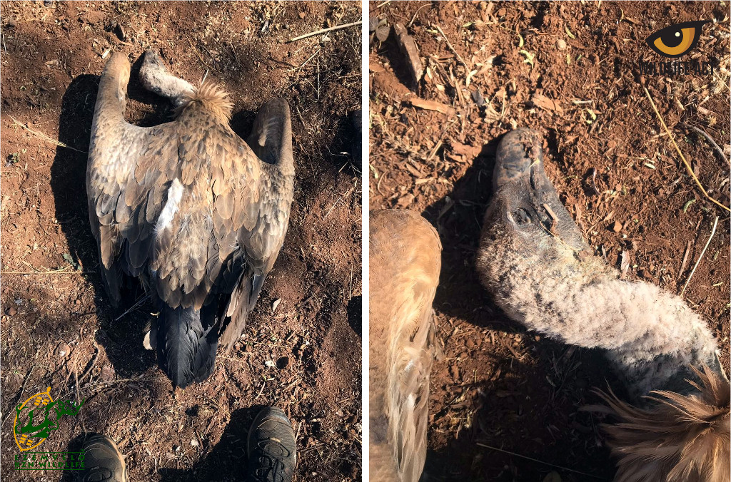 Vulture Poisoning Incidents in Zululand