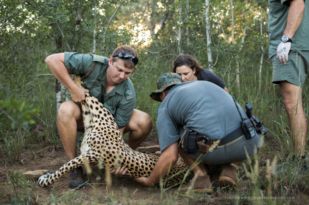 Wildlife ACT Courses - Conservation Training Course