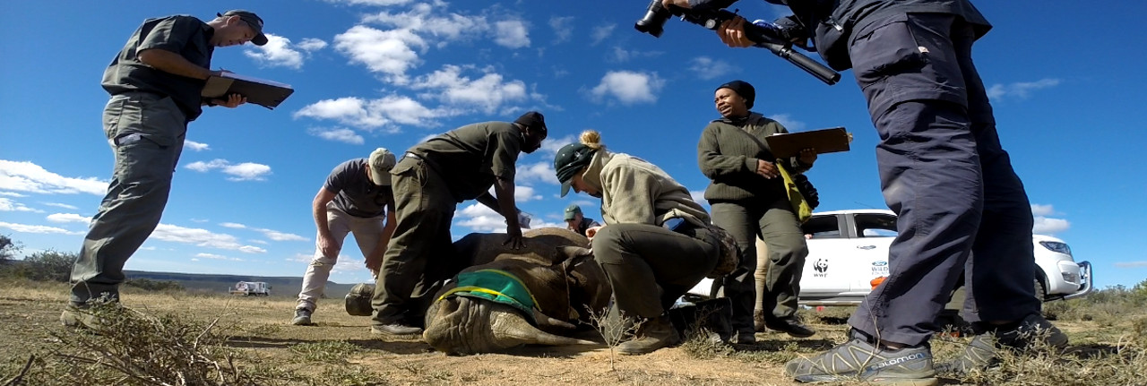 Conservation Safari in Zululand with Wildlife ACT
