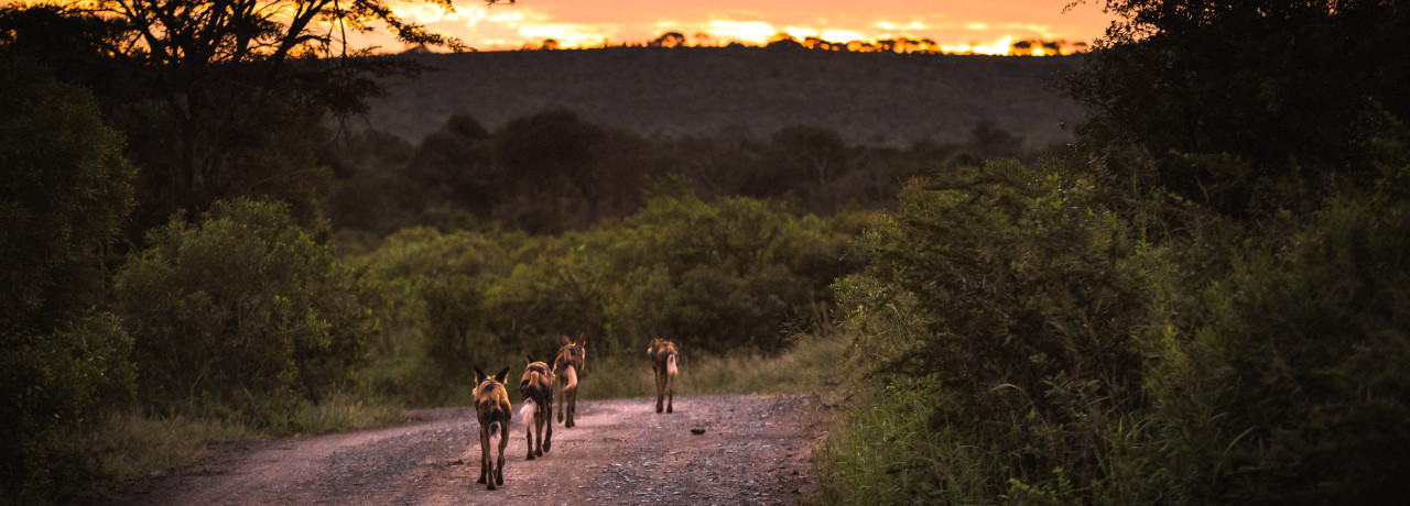 Conservation Safari in Zululand with Wildlife ACT. Photo by Chantelle Melzer