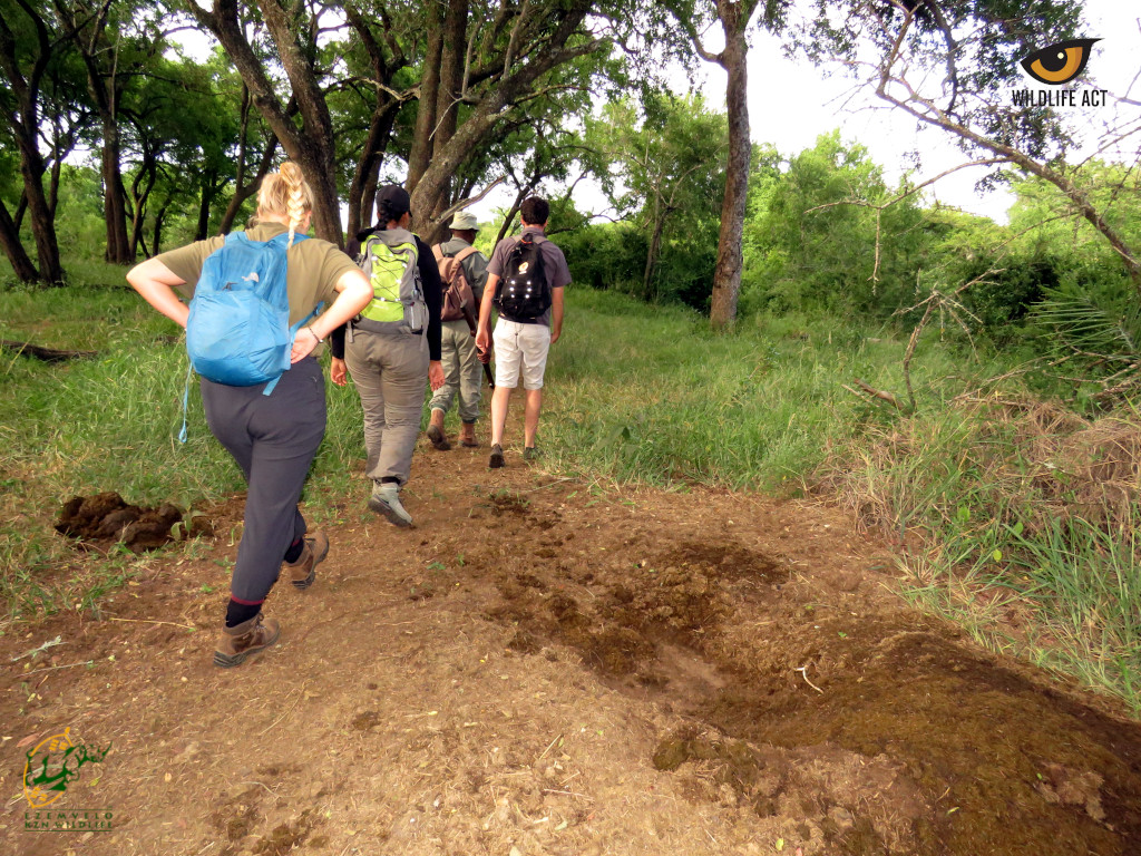 A Bush Walk Tracking Wildlife and Looking for Animal Signs