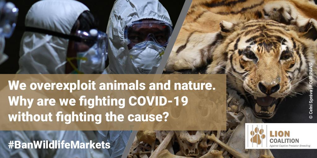 Coronavirus, Wet Markets & the Wildlife Trade