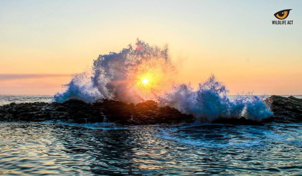 Celebrating World Oceans Day 2020