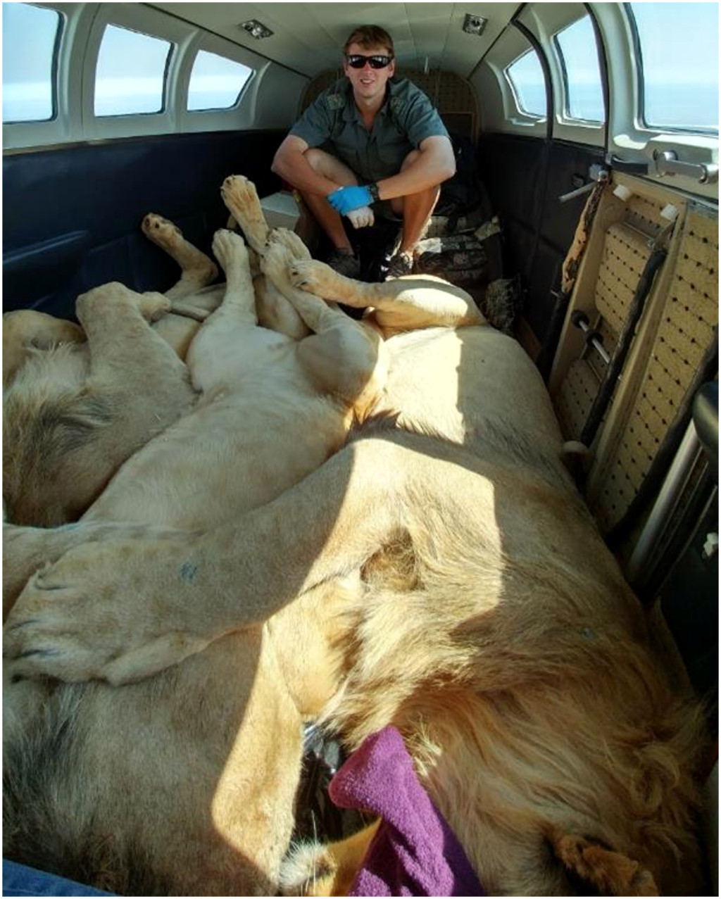 Tales of a Wildlife Vet - Episode 2: Lions on a Plane